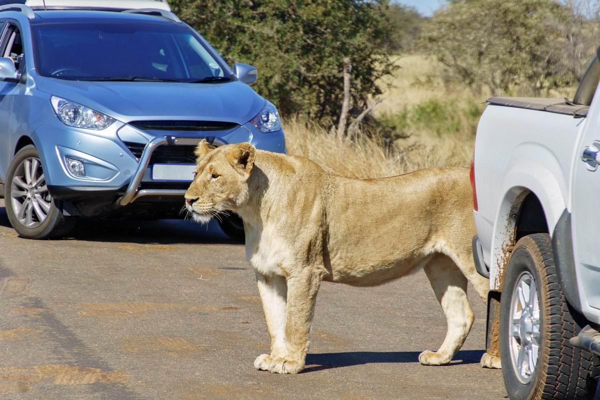 Louer une voiture et conduire en Afrique du Sud